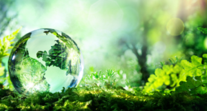 glass globe on ground in green forest