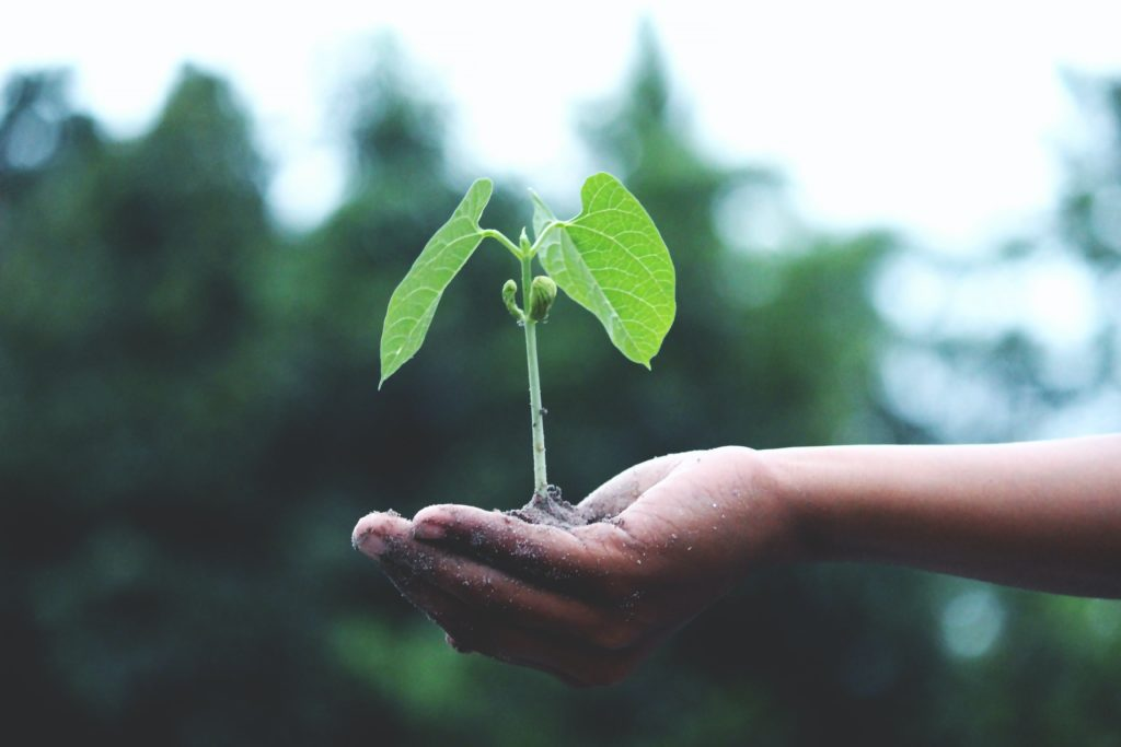 holding new growing plant in hand
